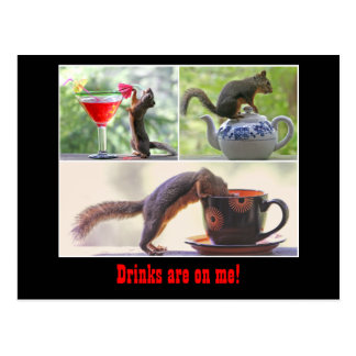 Funny Squirrel Postcard
