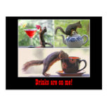 Funny Squirrel Postcard Post Cards