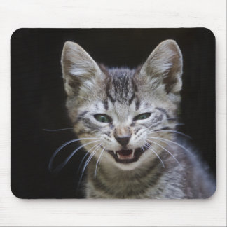 Funny Striped Tabby Kitten Mouse Pad