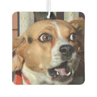 Funny Surprised Beagle Air Freshener
