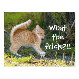 Funny Surprised Cat. What the frick? Postcard