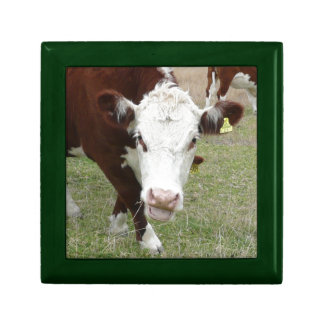 Funny Talking Cow Jewelry Boxes