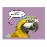 Funny Talking Parrot Birthday Postcard