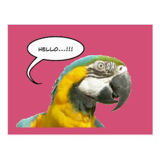 Funny Talking Parrot Hello Postcard