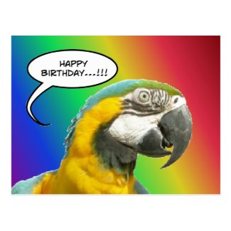 Funny Talking Parrot Rainbow Birthday Postcard