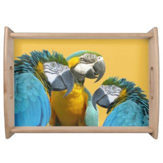 Funny Talking Parrots Cust. BG Color Serving Tray