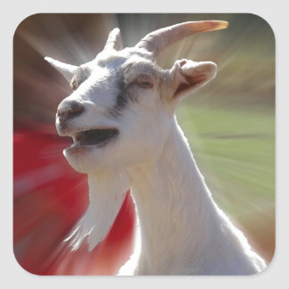 Funny Tallking Goat Photograph Square Sticker