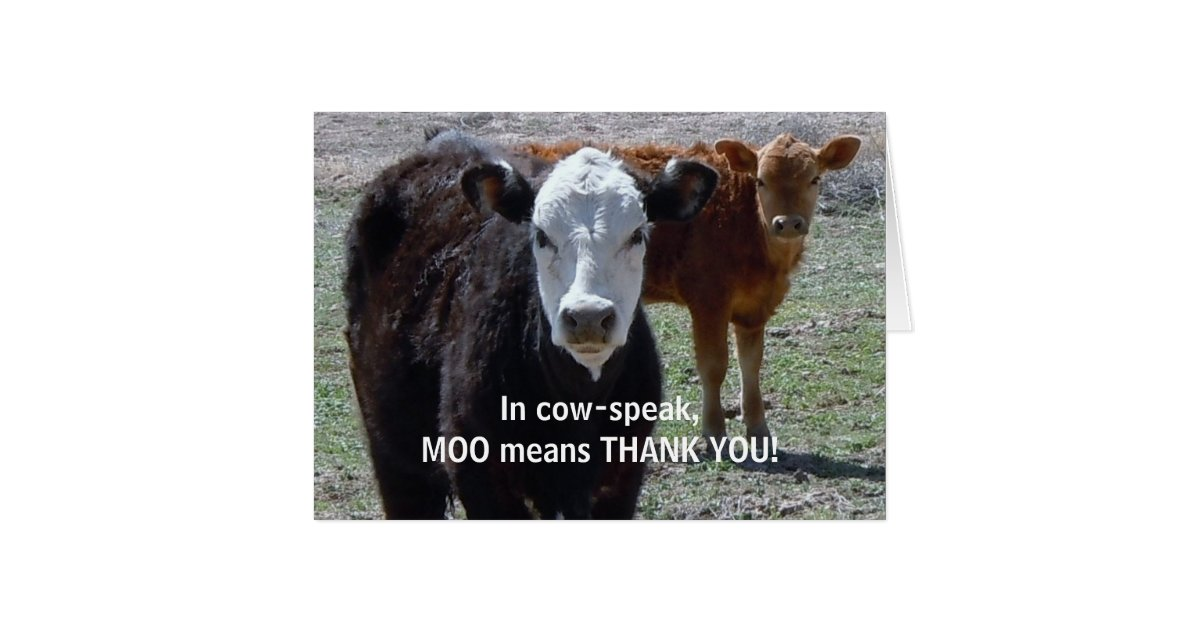 funny thank you - cow animal humor
