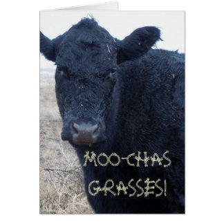 Funny Thank You Cute Black Cattle Cow Card