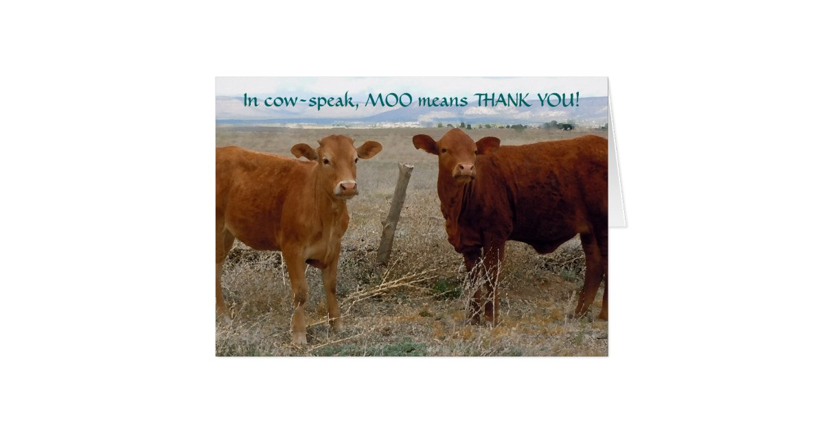 Funny Thank You Red Cow Animal Humor Ranch Card