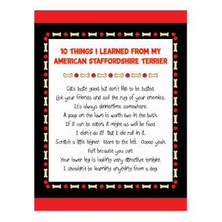 Funny Things I Learned From American Staffordshire Postcard
