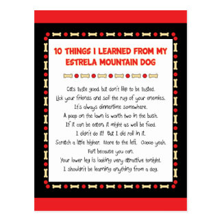 Funny Things I Learned From Estrela Mountain Dog Postcard