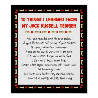 Funny Things I Learned From Jack Russell Terrier Poster