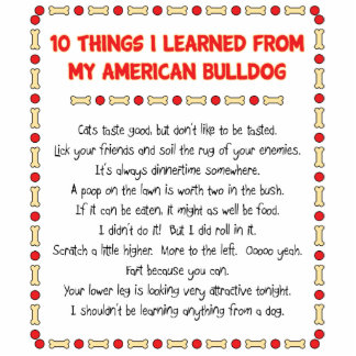 Funny Things I Learned From My American Bulldog Statuette