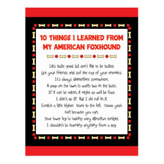 Funny Things I Learned From My American Foxhound Postcard