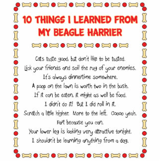 Funny Things I Learned From My Beagle Harrier Statuette