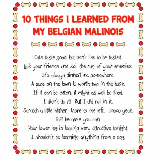 Funny Things I Learned From My Belgian Malinois Cutout
