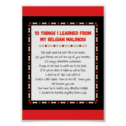 Funny Things I Learned From My Belgian Malinois Poster