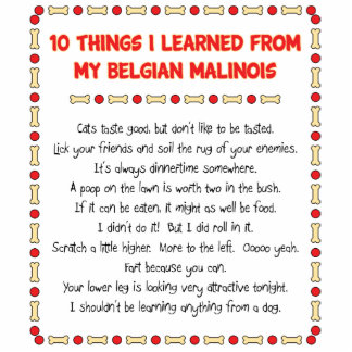 Funny Things I Learned From My Belgian Malinois Standing Photo Sculpture
