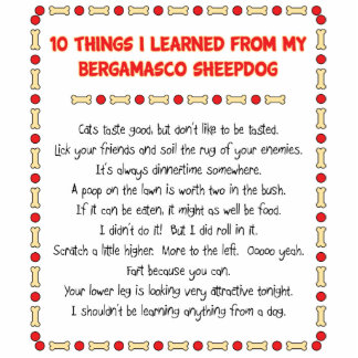Funny Things I Learned From My Bergamasco Sheepdog Cutout