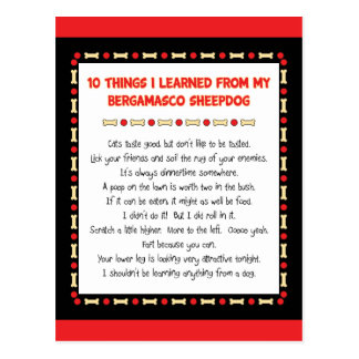 Funny Things I Learned From My Bergamasco Sheepdog Post Card