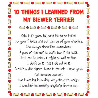 Funny Things I Learned From My Biewer Terrier Standing Photo Sculpture