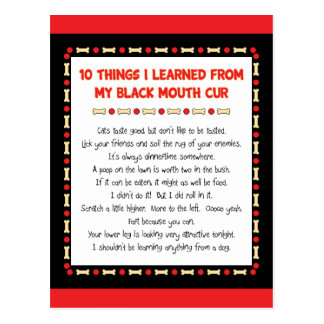 Funny Things I Learned From My Black Mouth Cur Postcard