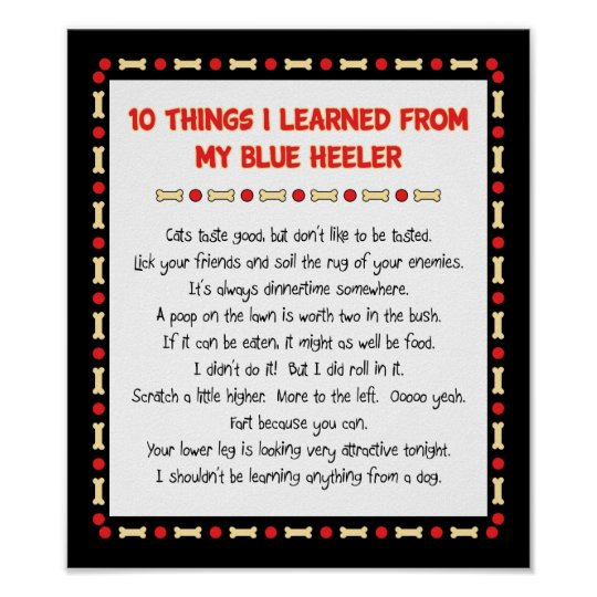 Funny Things I Learned From My Blue Heeler Poster