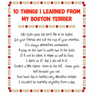 Funny Things I Learned From My Boston Terrier Photo Cut Out