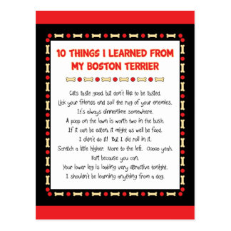 Funny Things I Learned From My Boston Terrier Postcard