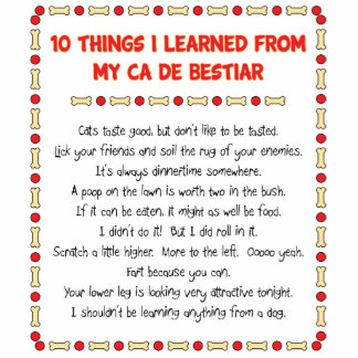 Funny Things I Learned From My Ca de Bestiar Acrylic Cut Out