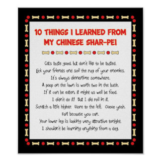 Funny Things I Learned From My Chinese Shar-Pei Poster