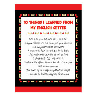 Funny Things I Learned From My English Setter Postcard