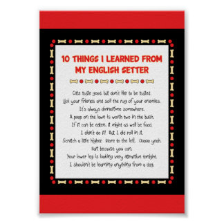 Funny Things I Learned From My English Setter Poster