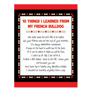 Funny Things I Learned From My French Bulldog Postcard