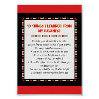 Funny Things I Learned From My Havanese Poster
