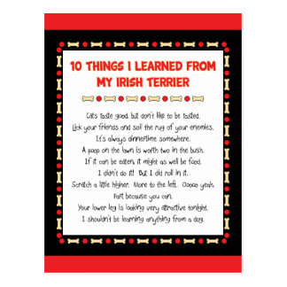 Funny Things I Learned From My Irish Terrier Postcard