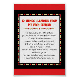 Funny Things I Learned From My Irish Terrier Posters
