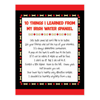 Funny Things I Learned From My Irish Water Spaniel Postcard