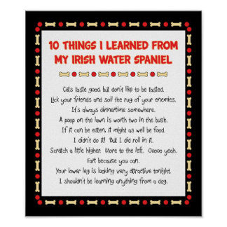 Funny Things I Learned From My Irish Water Spaniel Poster