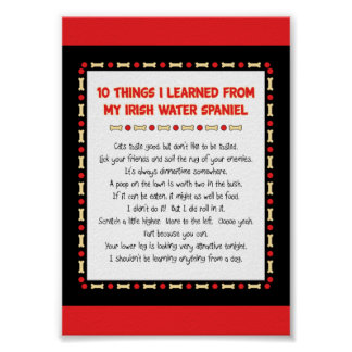 Funny Things I Learned From My Irish Water Spaniel Posters