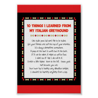Funny Things I Learned From My Italian Greyhound Poster