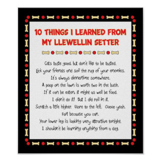 Funny Things I Learned From My Llewellin Setter Poster