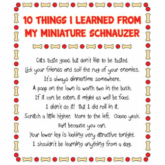 Funny Things I Learned From My Miniature Schnauzer Photo Cutout