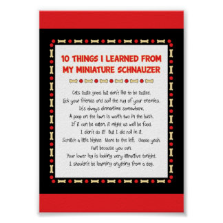 Funny Things I Learned From My Miniature Schnauzer Poster