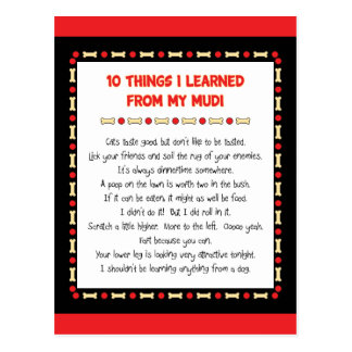 Funny Things I Learned From My Mudi Postcard