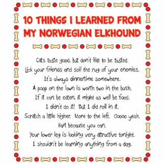 Funny Things I Learned From My Norwegian Elkhound Photo Sculpture