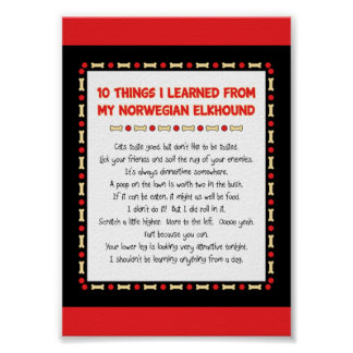 Funny Things I Learned From My Norwegian Elkhound Posters