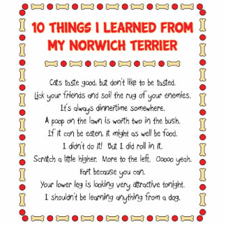 Funny Things I Learned From My Norwich Terrier Photo Cutouts