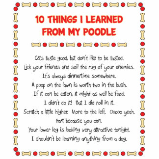 Funny Things I Learned From My Poodle Acrylic Cut Out